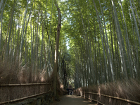 Road of bamboo forest Stock photo [1669958] Bamboo