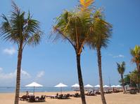 Bali Island Sanur Palm tree and beach Stock photo [1670103] Palm