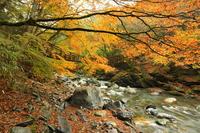 Fall back Iya Kazurabashi with autumn leaves Stock photo [1672304] Kazurabashi