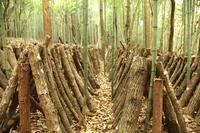 Shiitake cultivation Stock photo [1673889] Shiitake