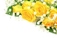 Yellow Roses Stock photo [1748814] Rose