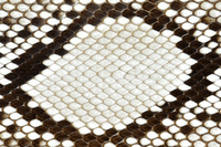 Skin of python Stock photo [1839923] Python