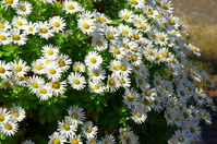 Gregarious to white flowers Stock photo [1841831] HamaKiku