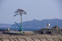 Ipponmatsu and crane of miracle Stock photo [1842977] ツナミ