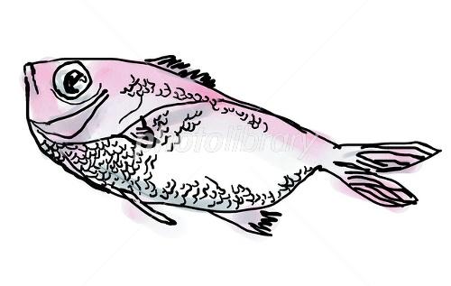 お魚 イラスト素材 2061050 フォトライブラリー Photolibrary