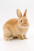 Rabbit Stock photo [2060660] Rabbit