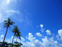 Palm trees and blue sky Stock photo [2064770] Guam