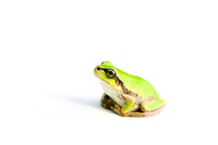 Frog to sit tree frog Stock photo [2158472] Frog