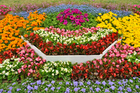 Begonia flower beds Stock photo [2161857] Flower