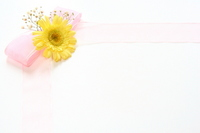 Gerbera yellow Stock photo [2165188] Gerbera