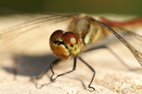 Dragonfly Stock photo [62820] Dragonfly