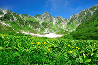 Alpine plants and Senjojiki Carl Stock photo [2288762] Summer