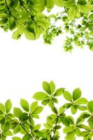 Fresh green Stock photo [2296740] Leaf