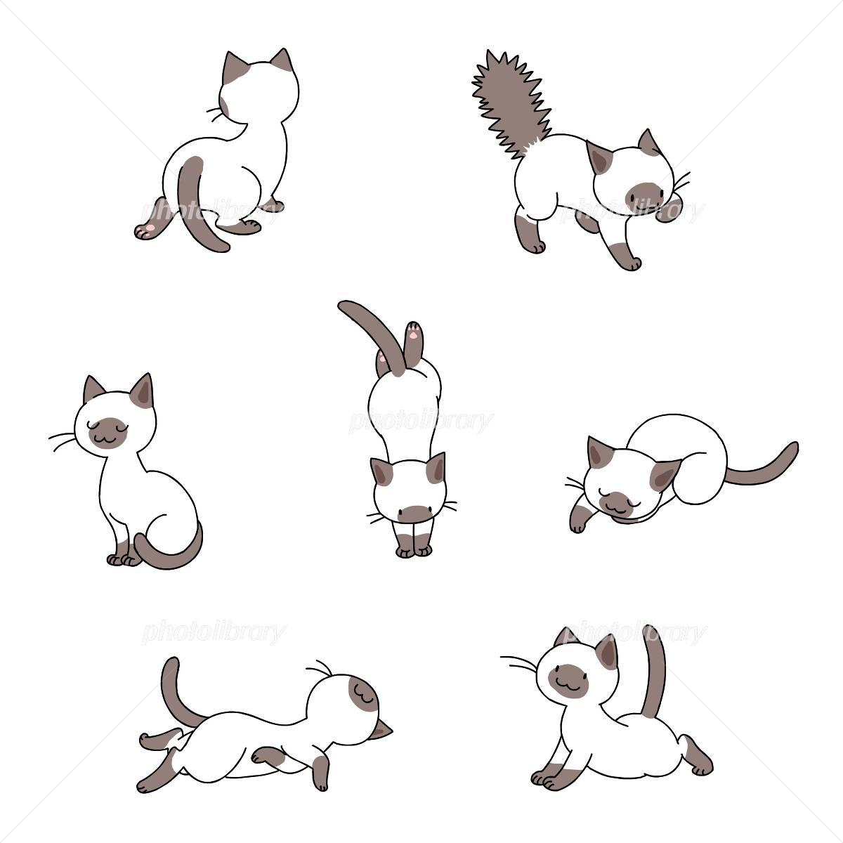 猫シャム イラスト素材 2422167 無料 フォトライブラリー