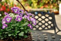 Lilac viola Stock photo [2413969] Viola