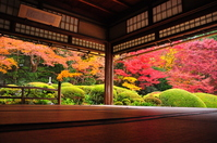 Autumn leaves of Shisen-do Stock photo [2419296] Kyoto