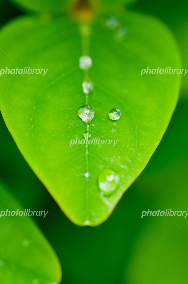 Fresh green leaves and raindrops Photo