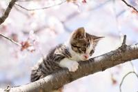 Cat and cherry Stock photo [2529693] CAT