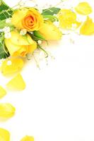 Yellow Roses Stock photo [2531265] Rose