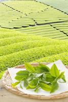 Tea Stock photo [2532549] Tea