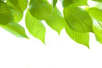 Leaves of fresh green Stock photo [2543730] Leaf