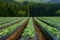 Field Stock photo [2543808] Kumamoto