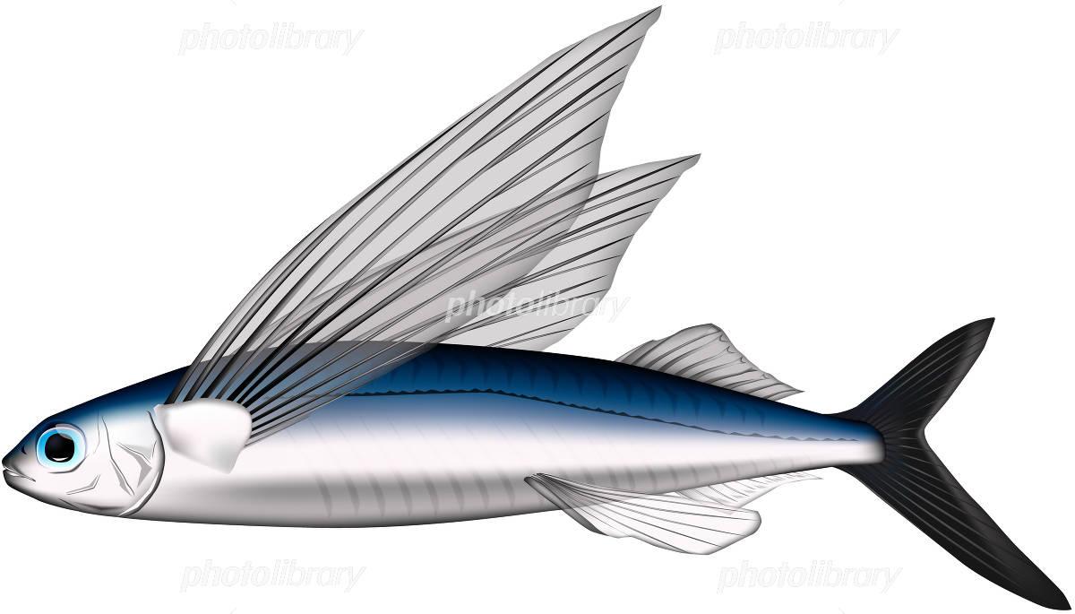 Flying fish イラスト素材