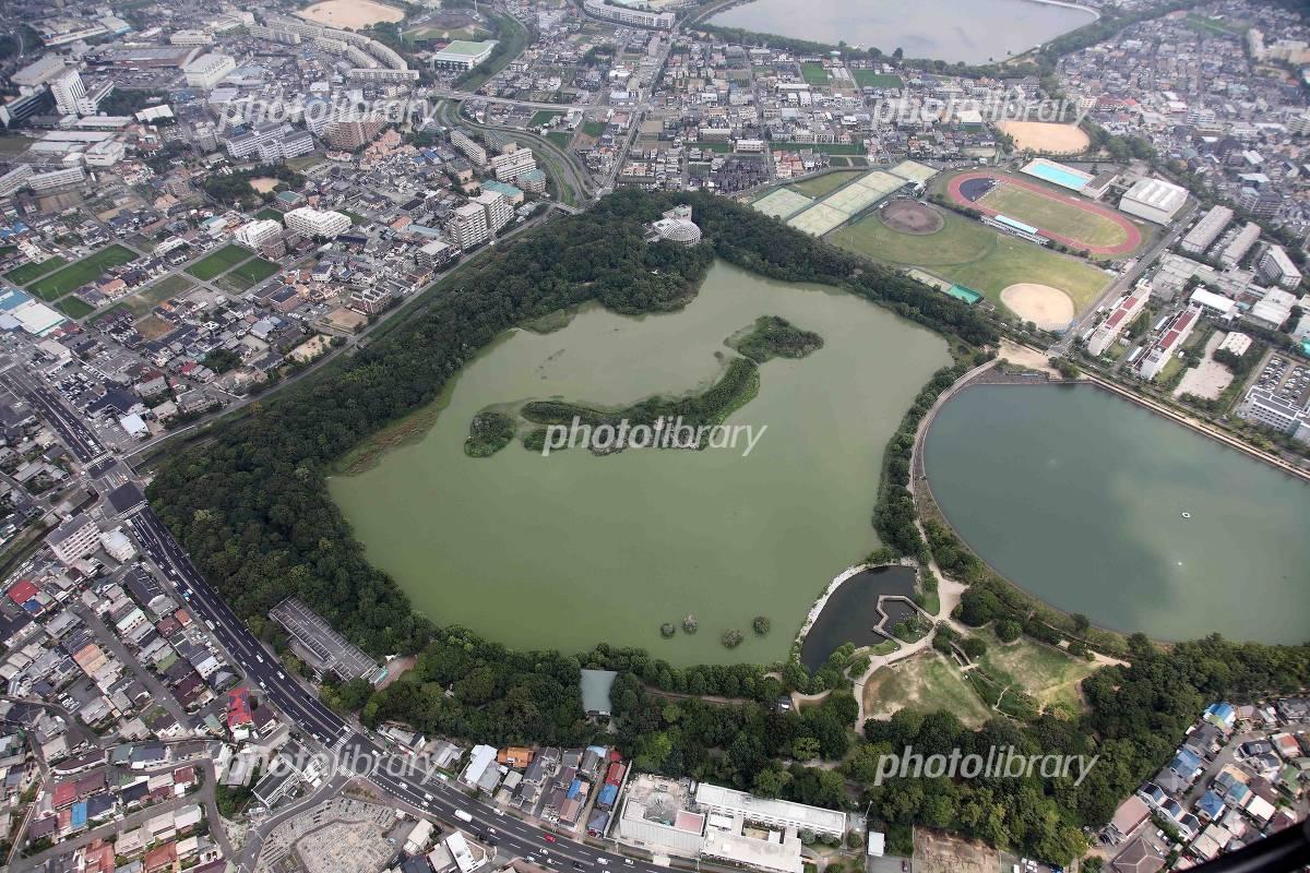 列島 昆陽 池 日本 コブハクチョウ・野鳥