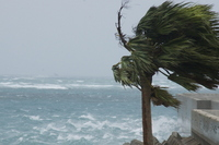 Palm trees to receive the typhoon wind Stock photo [2647585] Palm