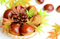 Chestnut Stock photo [2650588] Waguri