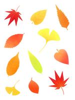 Autumn leaves [2651142] Leaf