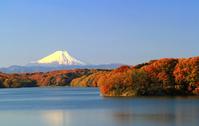 Mt. Fuji Stock photo [2655103] Sayamako