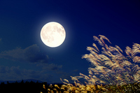 Japanese pampas grass and full moon [2655583] Japanese