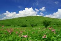 Summer of grassland Stock photo [2656890] Plateau