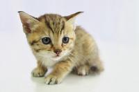 Cute kitten Stock photo [2657703] CAT