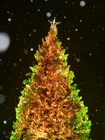 Christmas tree Stock photo [3872] Winter