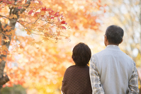 Rear View of senior couple overlooking the autumn leaves Stock photo [2818722] Person