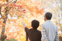 Rear View of senior couple overlooking the autumn leaves Stock photo [2818734] Person