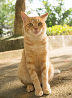 Stray cat in the park Stock photo [2823360] Park