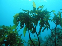 Seaweed Stock photo [2823649] Arame