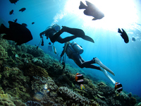 Divers swim in the tropical fish of herd Stock photo [2823626] Diver