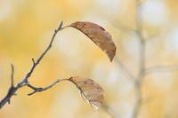 際立つ枯葉