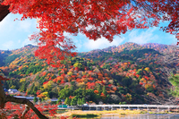 Autumn leaves in Kyoto stock photo
