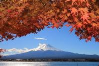 Mt. Fuji and autumn leaves Stock photo [2901337] Mt.