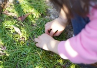 The hands of children to gardening Stock photo [2901813] Trial