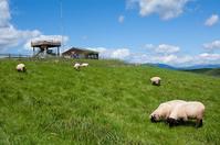 Multi-peace observatory and sheep Stock photo [2902372] Hokkaido