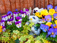 Rabbit surrounded by flowers Stock photo [2903770] Flower