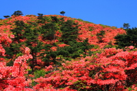 Azalea of Tokusenjosan Stock photo [2909795] Tokusenjosan