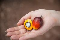 Oil palm fruit Stock photo [2985360] Elaeis