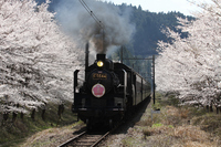 Sakura and Oigawatetsudo SL Stock photo [2986314] SL